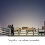 Vea en un video cuales son las mejores prácticas para el transporte de caballos