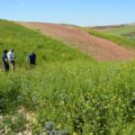 GOs sobre gestión de márgenes multifuncionales en secano y de Sclerotium rolfsii en patata en Andalucía