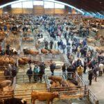 El Mercado de Ganado de Pola de Siero soluciona ciertas deficiencias de bienestar animal