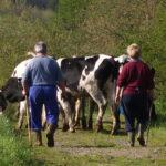 En Euskadi, el peso de la mujer en la agricultura crece, paralelamente, a la edad