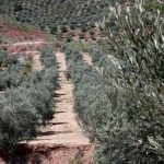 Castilla-La Mancha reconoce a 'Montes Norte' como Entidad Asociativa Prioritaria de Interés Regional