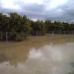 Preocupación en el campo por la coincidencia de las lluvias con el desemblase de Bornos