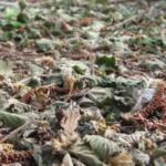 Unió de Pagesos calcula que se ha perdido la mitad de la cosecha de avellana en el Camp de Tarragona por las fuertes vientos