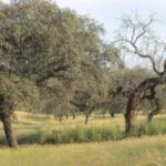 Nuevo Catálogo de Acciones contra la Seca de los Quercus en Andalucía