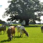 Friesland Campina quiere una línea de explotaciones Top que podrán aumentar su producción de leche