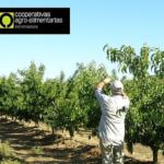 Solicitan a Enesa la ampliación de plazos en seguros de frutales y cereza