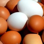 Científicos estudian la estructura interna de la cáscara para conseguir huevos de gallina más resistentes y saludables