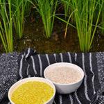 Visto bueno para la comercialización del arroz dorado en EEUU