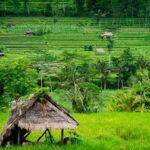 La Comisión Europea inicia una investigación de salvaguardia de las importaciones de arroz de Camboya y Myannmar