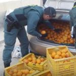 """Guardia Civil detiene """"in fraganti"""" en Murcia a 4 personas por robo de naranjas"""