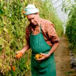 Los auditores de la UE examinan las herramientas de gestión de riesgos y crisis para estabilizar la renta de los agricultores