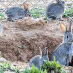 Castilla-La Mancha subvencionará mallas conejeras