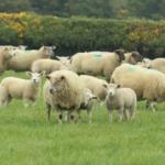 Irlanda ampliará la identificación electrónica a todos los animales