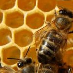 La Junta destinará 1,6 millones de euros para mejorar la producción y comercialización de la miel de Castilla y León