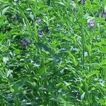 España exportó el 72% de su alfalfa deshidratada en 2017/2018