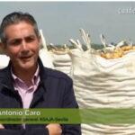 El sinsentido de exportar el 70% de la patata nueva española y consumir aquí patata vieja francesa