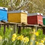 Cantabria convoca primas de polinización para titulares de explotaciones apícolas