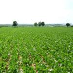 El Gobierno Vasco quiere consensuar una petición conjunta de moratoria para los neonicotinoides en remolacha