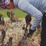 En 2018 se incorporarán 310 nuevos jóvenes al sector agrario en Aragón