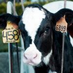 IRTA asesorará a la AECOSAN en materia de bienestar animal