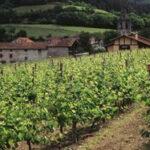 El MAPA concede toda la superficie disponible para  nuevas plantaciones de viñedo