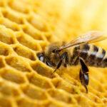 La Xunta aprueba 14 solicitudes de ayudas a la apicultura por un total de 600.000 €