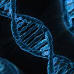 Los organismos obtenidos por mutagénesis son OMG y están sujetos a la Directiva sobre los OMG, según el Tribunal UE