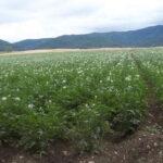 La Comisión Europea no renueva la autorización del herbicida dicuat