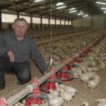 El descalabro de los pequeños productores de pollo