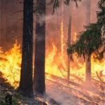 El 90% de los incendios forestales son originados por el hombre