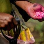 Prevista una menor producción de maíz y soja en América Latina