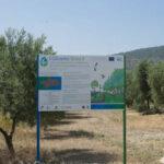 El 85% de los olivareros andaluces estarían dispuestos a dejar cubierta vegetal en sus olivares