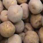 Faltará patata en el noroeste de Europa: la cosecha podría reducirse en un 18%.
