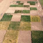 La Comisión Europea concede derogaciones en el pago verde por la sequía