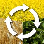El pago verde en España ha incrementado la diversificación de cultivos, los pastos permanentes y los CFN