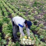 La EPA confirma que se consolida la reducción del empleo en el sector agrario