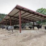 Cantabria publica su nuevo sistema de identificación y registro del ganado bovino