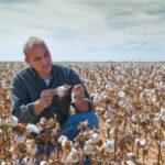 Primer aforo de algodón: previsto un aumento del 1,5%