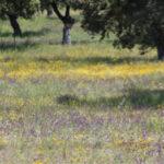 La Junta de Andalucía publica la lista de beneficiarios de las ayudas a las dehesas
