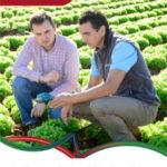 ICL lanza su nuevo catálogo de la gama Agromaster para una fertilización precisa