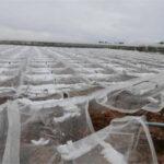 Andalucía pone en marcha la campaña de retirada de plásticos agrícolas