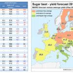 El rendimiento UE de la remolacha se revisa a la baja