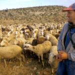 El FEGA recalcula los importes de la ayuda al ovino y caprino