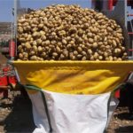 Recta final de la campaña de patata en Castilla y León
