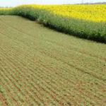 Los agricultores franceses le proponen a la Comisión 5 medidas para promover las proteaginosas
