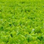 Los agricultores franceses piden a su gobierno excepciones temporales para los neonicotinoides