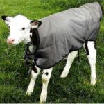 Consiga un pack de 5 mantas para sus terneros