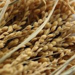 AVA-ASAJA pide al Gobierno el etiquetado obligatorio del origen también para el arroz, los cítricos o la horchata