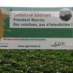 Los remolacheros franceses inician una campaña para conseguir una derogación para los neonicotinoides