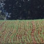 Castilla y León abre una nueva convocatoria para las ayudas agroambientales y de agricultura ecológicas